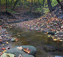 Autumn Creek by Adam Bykowski