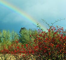 Rosehips At The End Of A Rainbow by Chuck Gardner