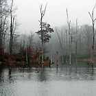 Black Hill Park in the Morning Fog - Maryland by Bine