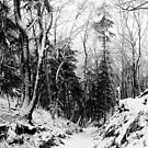 winter landscape in black and white by Cornelia Togea