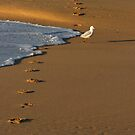 Seagull And Footprints by Noel Elliot