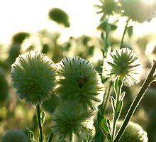wild desert flowers by assh0le