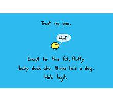 Little Fluffy Du.. uhhh Dog Photographic Print