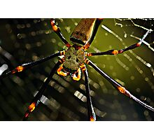 Spidey! Photographic Print