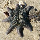 Sea Star by Christine Jones