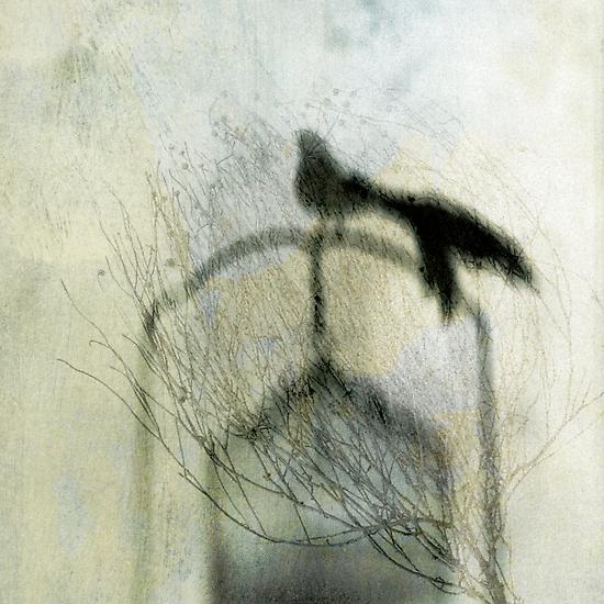 Free Bird by Elena Ray