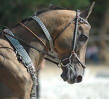Akhal-Teke horse by Michèle  van Kasteren