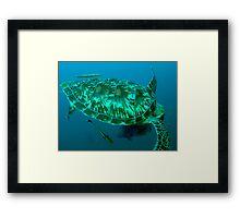 Green turtle shell Framed Print