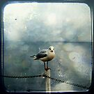 Seagull in Winter by Friederike Alexander