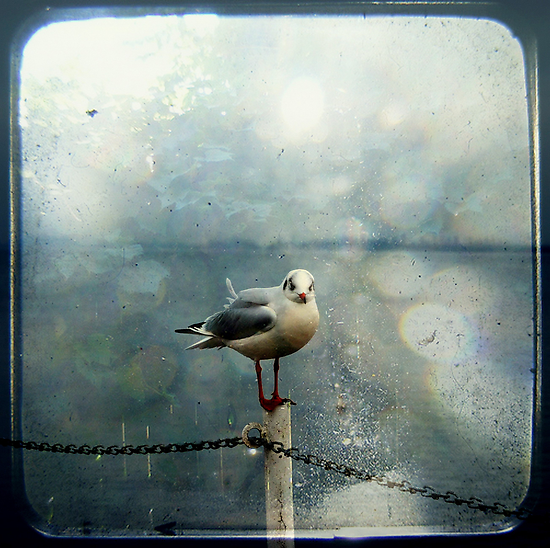 Seagull in Winter by Friederike Alexander