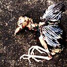 dead birdie by Vimm