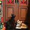 Pets at the Holidays