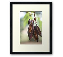 Seeds in a Pod Framed Print