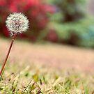 Fine by nature by Denis Marsili - DDTK