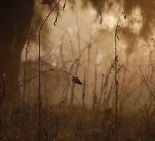 Fine nature by Denis Marsili - DDTK