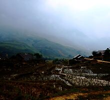 Soggy Rice Hills by DavidCThomson