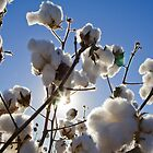 Clouds of Cotton by Cranston Reid
