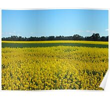 Golden Fields and Sky Poster