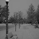 Winter Morning  by Andrew  Landau