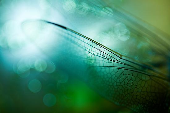 Emerald Damselfly  by ╰⊰✿Sue✿⊱╮ Nueckel