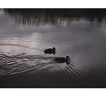 Ducks on the Lake Photographic Print