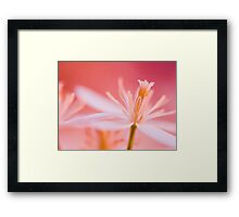 Pink Lace.  Framed Print