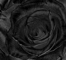 BLACK ROSE  by Michelle BarlondSmith
