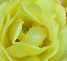 YELLOW CREAM ROSE IMPRESSION by Michelle BarlondSmith