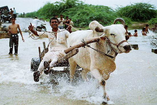 Rural Go Carting!!! by Biren Brahmbhatt