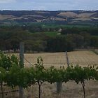 Willunga hills, vineyard view by shallay