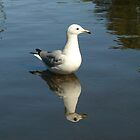 Seagull Diabolique by SeeingTime