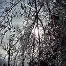 Subdued Winter Sun, Late Afternoon by Rebecca Bryson