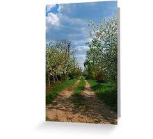 Rural road in spring Greeting Card
