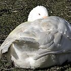 Snuggling in a Goose feather duvet........ by lynn carter