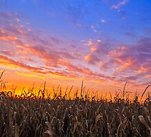 Vibrant Harvest by Kenneth Keifer