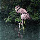 Flamingos by Wayne King