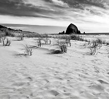 Haystack Desinations (Cannon Beach, OR) by Jenny Ryan