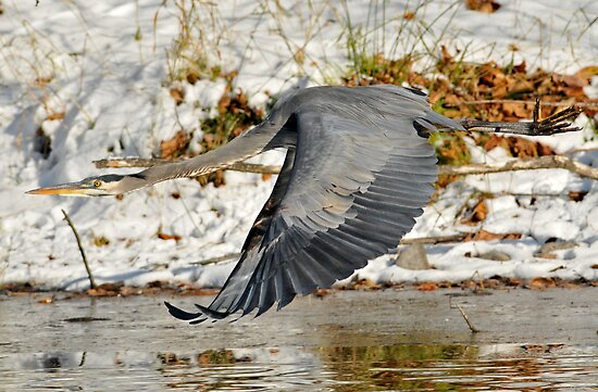 Big for a Snow Bird by Ken Haley