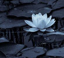 Water Lily Etudes, Revisited for the Summer Solstice by Richard VanWart