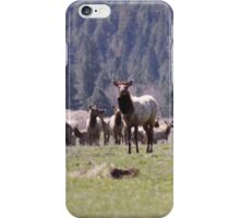 Herd of Elk iPhone Case/Skin
