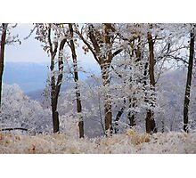 Winter Dreams, most winters I dream of spring Photographic Print