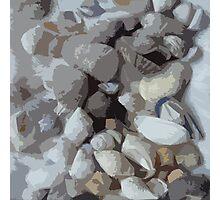 Shells, shells and more shells! Photographic Print