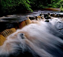 The Rivelin by Roger Butterfield