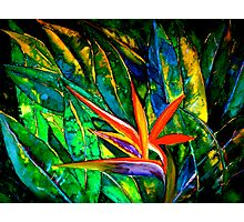 The Bird of Paradise Photographic Print