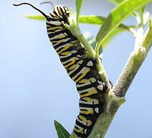 Wanderer caterpillar 2 by tarnyacox