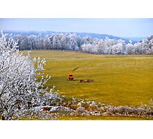 Out To Pasture,  Brannon Mt. NW Arkansas, USA  Photographic Print