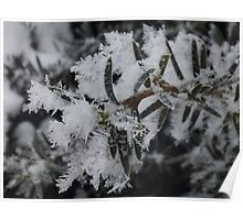 Frosted Branch Poster