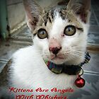 Kittens Are Angels With Whiskers by smile4me
