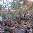 Creek Bed , King&#x27;s Canyon, Watarrka NP, Northern Territory by Adrian Paul