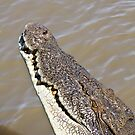 Saltwater Crocodile by Nickolay Stanev